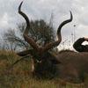 Охотничий тура в Африке